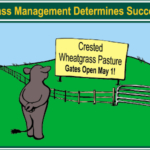 Grass management determines success. (Courtesy of NDSU)