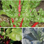 Super cool greens – Swiss chard, beets, and kale. (University of Illinois Extension)