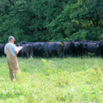 A new grant from the USDA's National Institute of Food and Agriculture will provide over a quarter million dollars to train 20 undergraduate students in beef cattle nutrition research over the next four years. (Courtesy of University of Illinois)