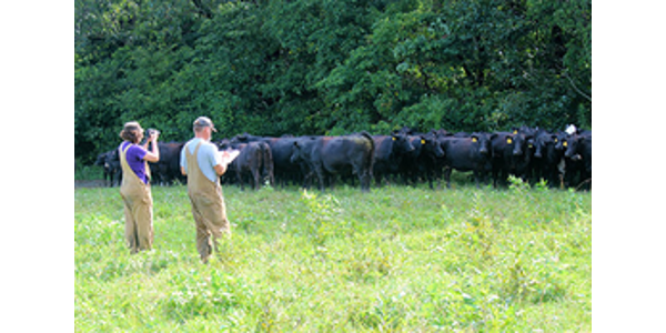 Grant will train leaders in beef cattle nutrition