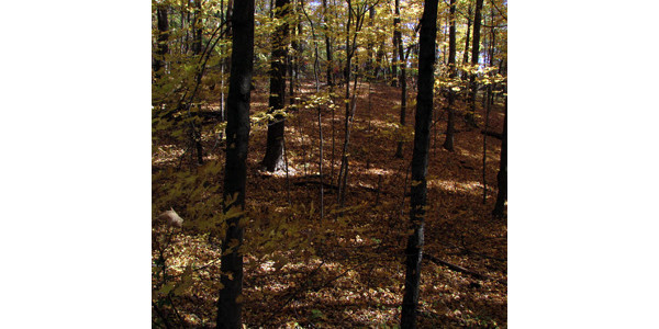 Leaf litter is broken down into rich, organic matter in our forests. (Credit: SV Fisk)