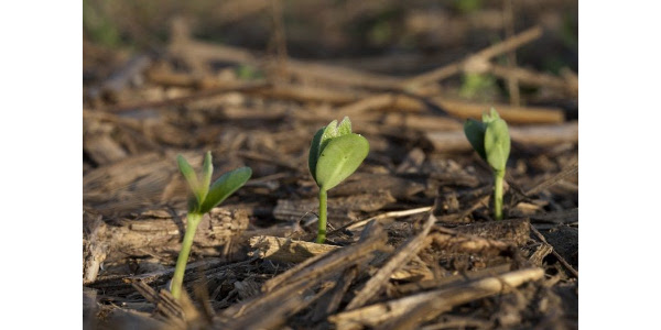 BMPs to consider when planting soybeans