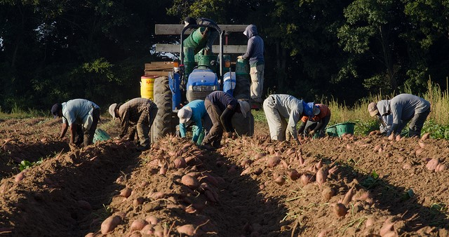 Modernizing the H-2A agricultural visa program