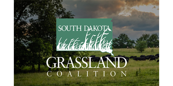 While grazing is the primary means of harvesting the majority of South Dakota's native grasslands, haying also plays an important role in native and tame grassland management. (Courtesy of SDSU Extension)