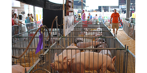 Five things swine producers should know