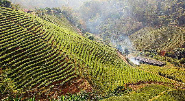 Thailand to up controls on farm chemicals