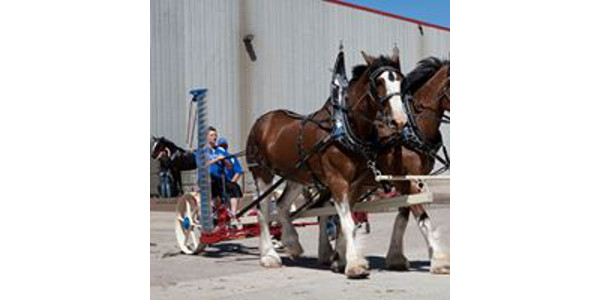 The farm team class 'slows things down' and showcases antique horse drawn equipment at the Brookings, SD, June 23 & 24 Dakota Royal Charity Draft Horse Show. Nicki Fuller, Clark, SD, is planning to participate with her Clydesdale team. (Courtesy of Dakota Royal Charity Draft Horse Show)