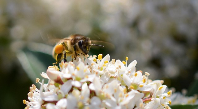 EU proposes action on bees & pesticides | Morning Ag Clips