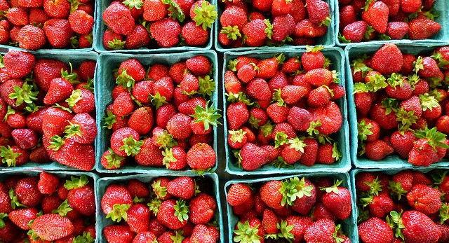UMaine offers tips for using June produce