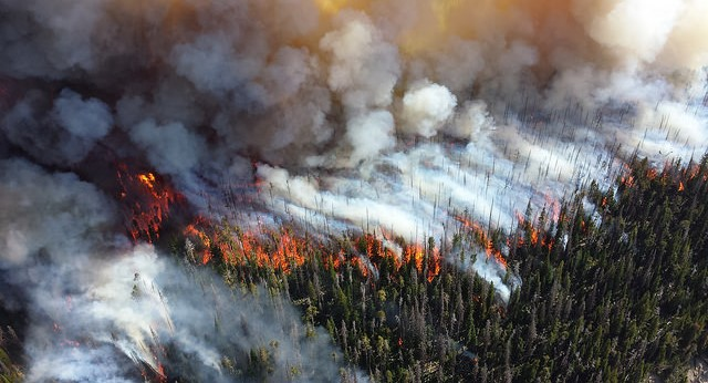 OFRF plans for wildfire relief