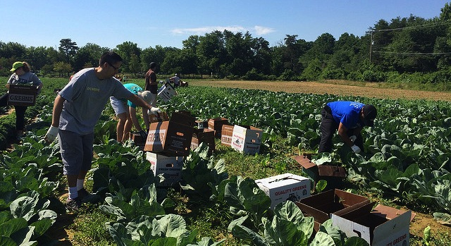 Food bank partners with local farms