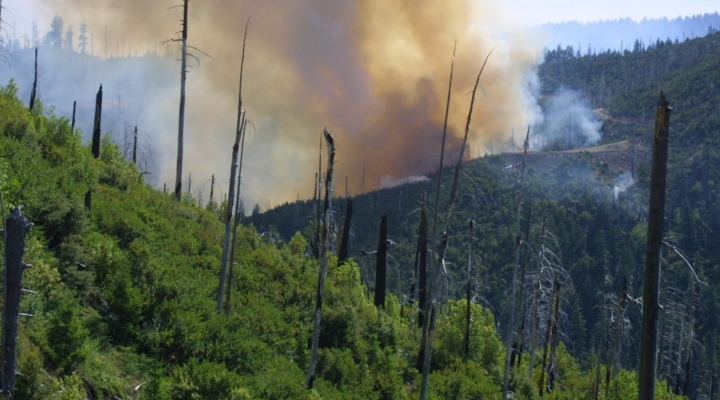 Warming future means more fire, fewer trees