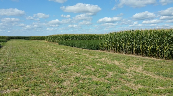 Study finds crop rotation decreases emissions