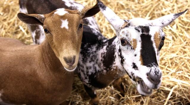 Northeast Livestock Expo starts May 17th!