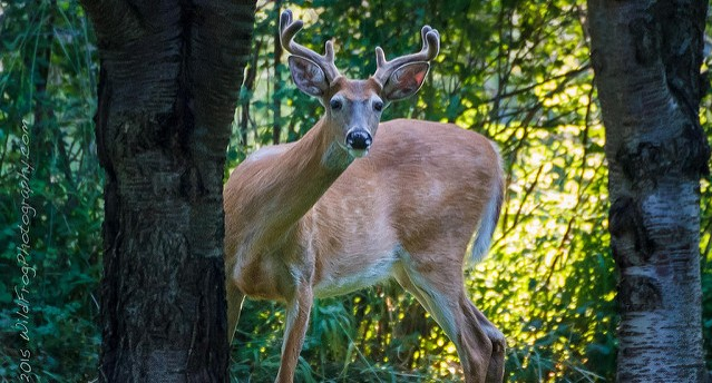 NY officials fight brain disease in deer