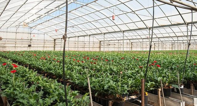 Determining effective methods of irrigation