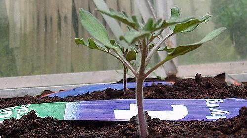 Otsego Master Gardeners Annual Plant Sale