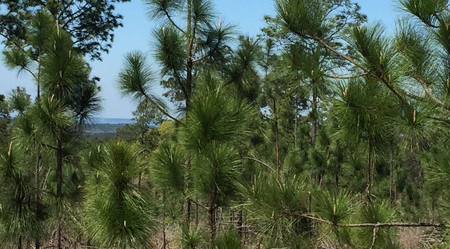 $2.7M conservation easement protects working forest