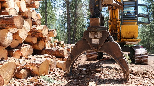 Forest products important to region's economy