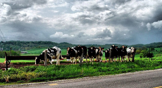 Dairy groups comment on food safety regulations
