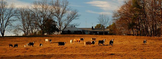 Statement of SC Farm Bureau Federation President Harry Ott