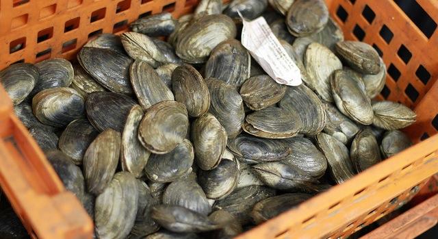 Greenwich taps thriving shellfish industry