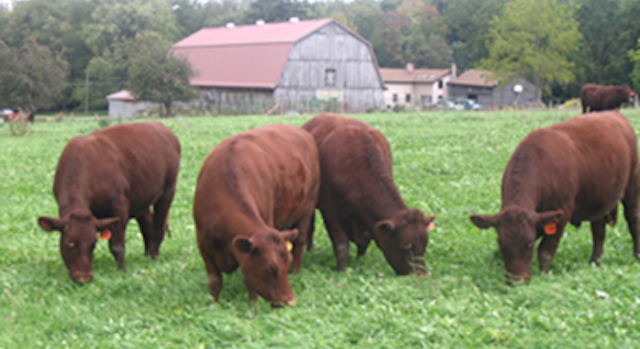 Pasture Walk to focus on soil health