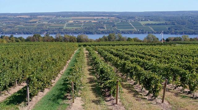 Farm Credit East recognizes wine, grape growers
