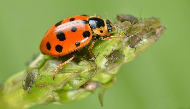 Integrative Pest Management Gardening Class