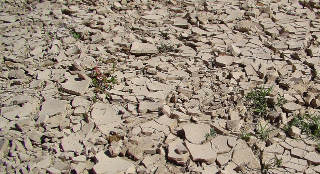 Drought continues to stress crops, rangeland