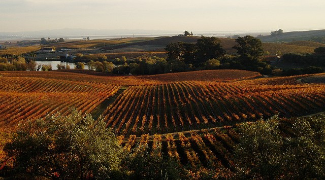 Conference connects winegrowers, climate experts