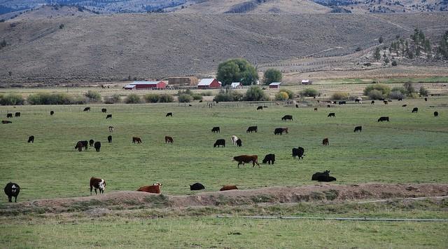 Cattle handling facilities workshop scheduled