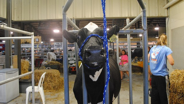 16th Annual Western NY Spring Dairy Preview