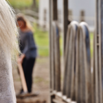 Cases of Equine Herpesvirus (EHV) have been identified across the United States. (Courtesy of SDSU Extension)