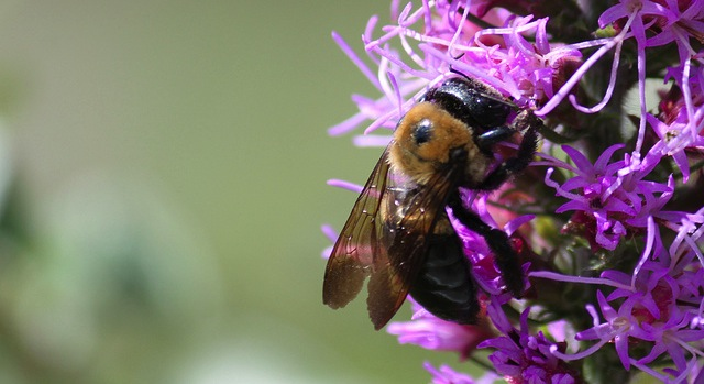 Bees adjust diet according to season