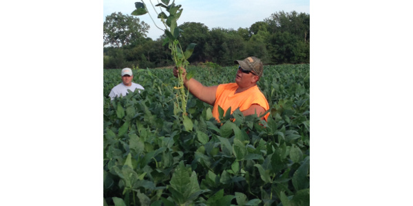 Field day to focus on livestock on cover crops