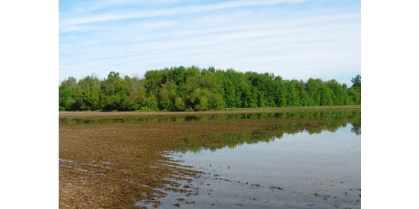 Flooded field in 2018. (Photo by Mike Staton, MSU Extension)