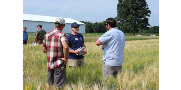 Multiple opportunities exist to engage with malting barley research in Michigan in June. (Photo by Ashley McFarland)