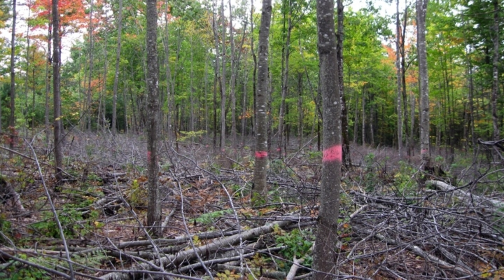 Considering changes to Maine forest management