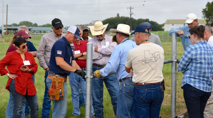 Texas A&M Beef Cattle Short Course Aug. 6-8