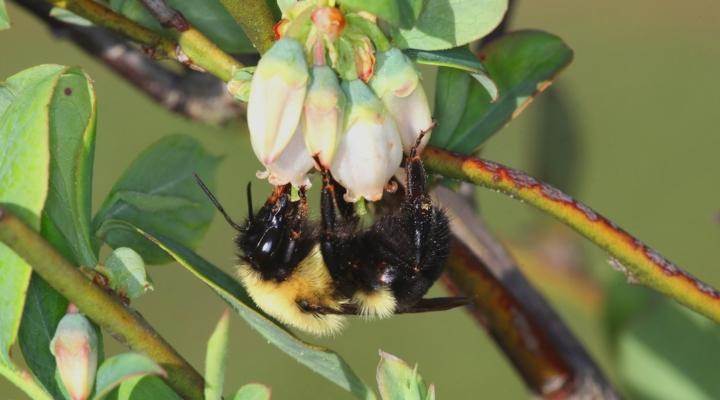 Beyond honey bees