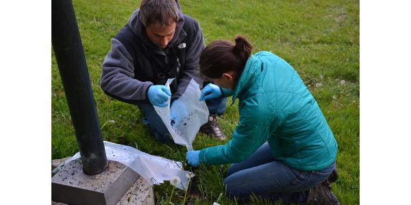 Zach Peery and HeatherKaarakka collecting guanofor a study of bat's diets. (Heather Kaarakka)