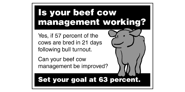 Day 21 following bull turnout, 60% of cows bred