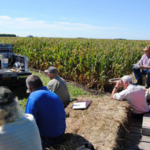 Weeds, herbicides, cover crops and sulfur fertilization of corn will highlight the summer field day at the Iowa State University Northern Research and Demonstration Farm near Kanawha. (Courtesy of ISU Extension and Outreach)