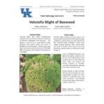 Volutella Blight of Boxwood (PPFS-OR-W-26) is available online. (Courtesy of University of Kentucky Extension)