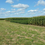 Scientists at the University of Illinois have provided further evidence that rotating crops increases yield and lowers greenhouse gas emissions compared to continuous corn or soybean. (Courtesy of University of Illinois)