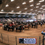 At the June 23 & 24 Dakota Royal Charity Draft Horse Show you can answer: How would YOU judge 60+ draft horses in the ring? (Courtesy of Dakota Royal Charity Draft Horse Show)