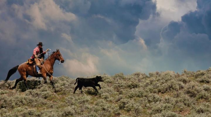 2017 Cattlemen's Stewardship Review