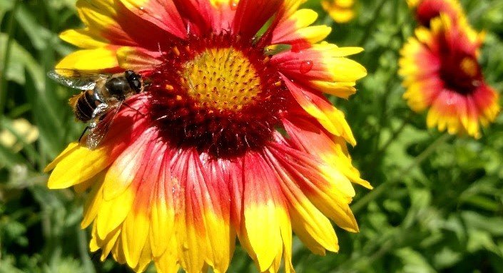 Working together to protect pollinators