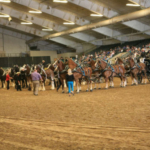 At the Dakota Royal Charity Draft Horse Show, after the 14 Six Horse Hitches are judged in their 'heats' of competition, all hitches will return to the show ring for final placement. Do the math...how many one ton equine athletes will YOU see trying to find a parking spot in the show ring? A skilled driver is a must! Have your camera ready! (Courtesy of Dakota Royal Charity Draft Horse Show)